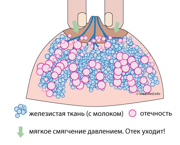 Унеё в груди есть молоко фото 135-142